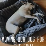 MOVING MY DOG FOR THE FINAL TME