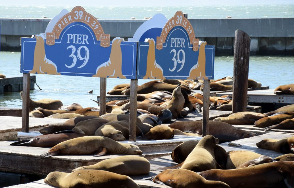 pier 39 Fishermans wharf San Francisco