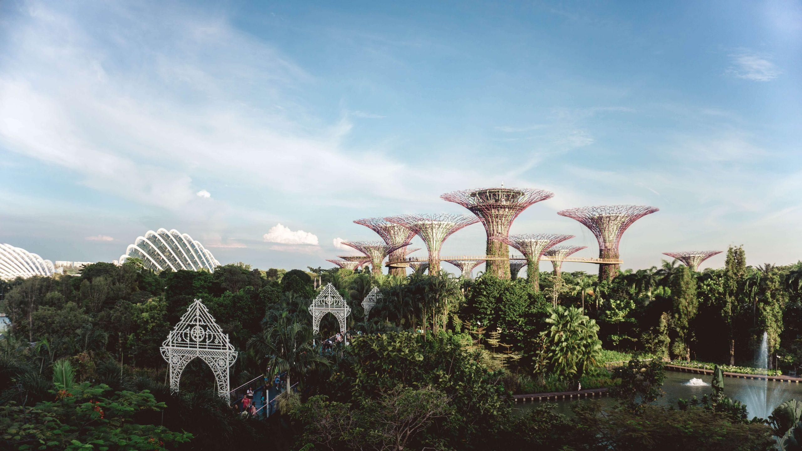 SIngapore expat stories
